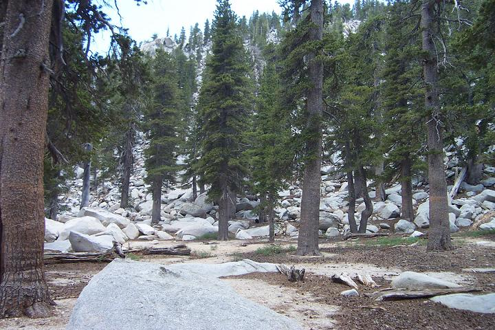 Trees and rocks... About 9500 feet in San Jacinto State Forest