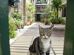 Cat looking at me from courtyard - Cordoba, Spain