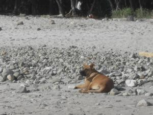 Life is good in Mal Pais - Chillin Dog