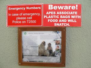 Beware of ape!  Barbary macaque warning