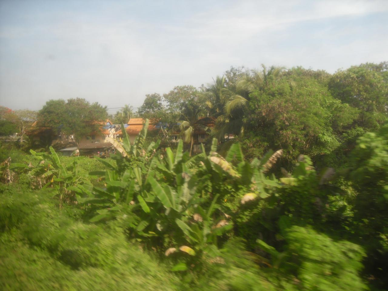 Another view from the train to Surat Thani
