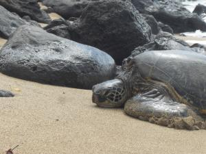 Close up of sea turtle on the beach